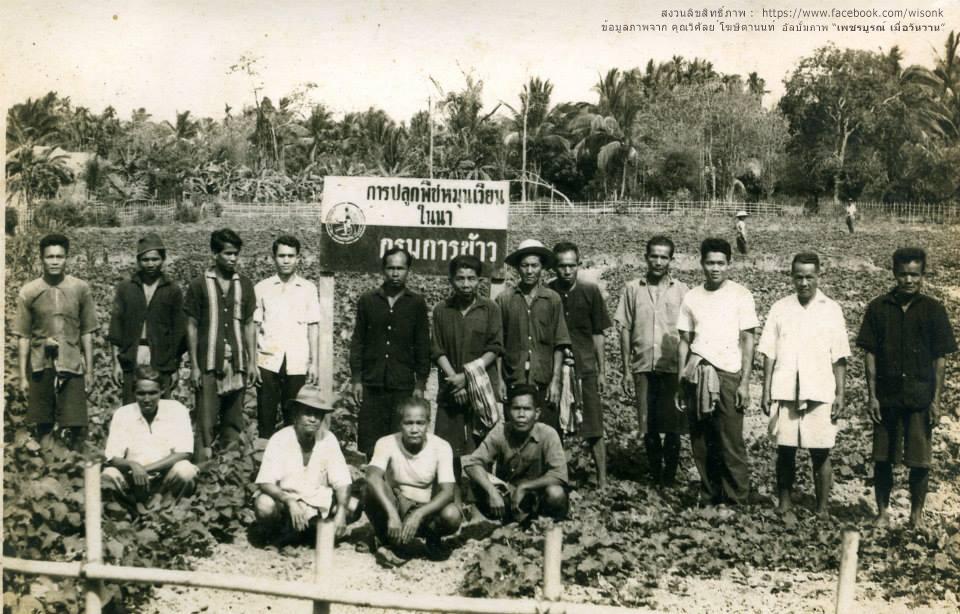 186-การส่งเสริมให้เกษตรกรในเขตเทศบาลเมืองเพชรบูรณ์ ปลุกพืชหมุนเวียนในนาข้าว