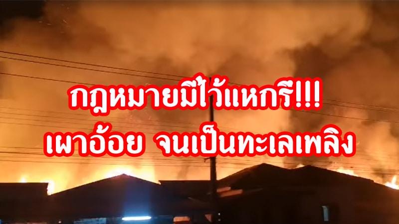 เผาอ้อยที่วิเชียรบุรี